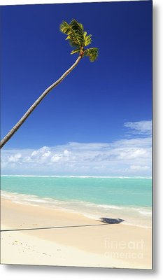 Tropical Beach And Palm Tree Metal Print by Elena Elisseeva