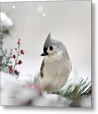 Tufted Titmouse Square Metal Print by Christina Rollo