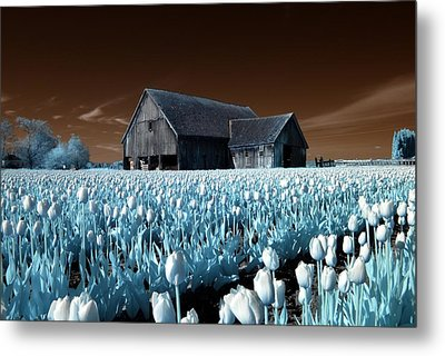 Metal Print featuring the photograph Tulip Barn by Rebecca Parker