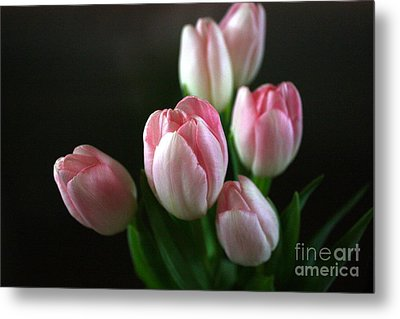 Tulips On Display Metal Print by Cathy Dee Janes