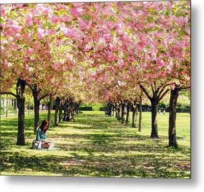 Under The Cherry Blossom Trees Metal Print by Nina Bradica
