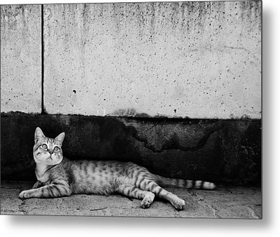 Metal Print featuring the photograph Untitled by Laura Melis