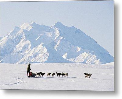 Usa, Alaska, Sled Dogs, Park Ranger Metal Print by Gerry Reynolds