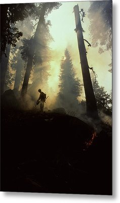 Usa, California, Forest Fire, Sequoia Metal Print