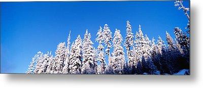 Usa, Oregon, Pine Trees, Winter Metal Print by Panoramic Images
