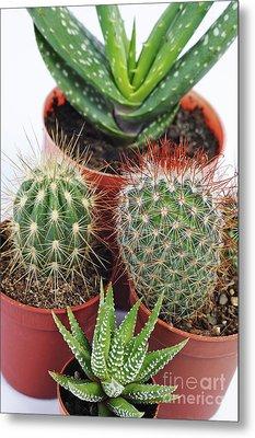 Varied Mini Cactus In Pots Metal Print by Sami Sarkis