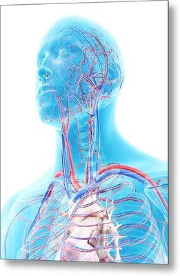 Vascular System In Head Metal Print