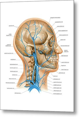 Venous System Of The Head And Neck Metal Print by Asklepios Medical Atlas
