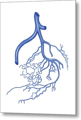 Venous System Of The Male Pelvis Metal Print by Asklepios Medical Atlas