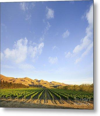 Vineyard In Canterbury New Zealand Metal Print by Colin and Linda McKie