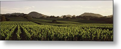 Vineyard With Mountains Metal Print