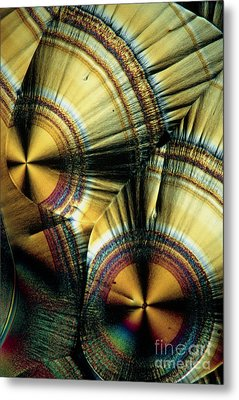 Vitamin C Crystals Metal Print by Claude Nuridsany and Marie Perennou