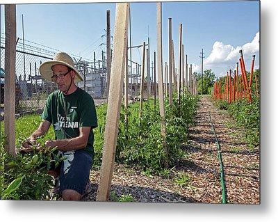 Volunteer In A Community Garden Metal Print