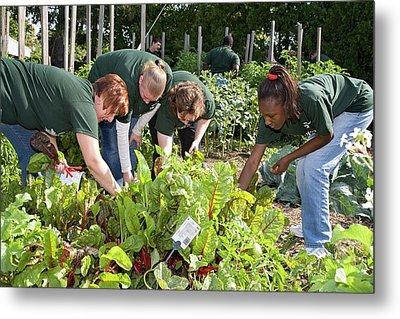Volunteers In A Community Garden Metal Print