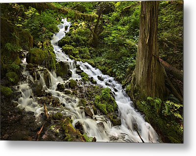 Wahkeena Creek Metal Print