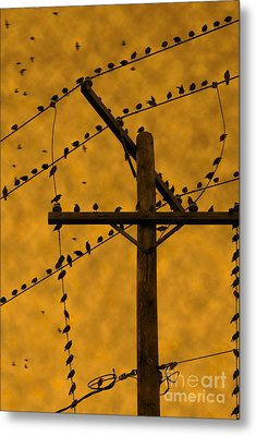 Waiting For Hitchcock Metal Print