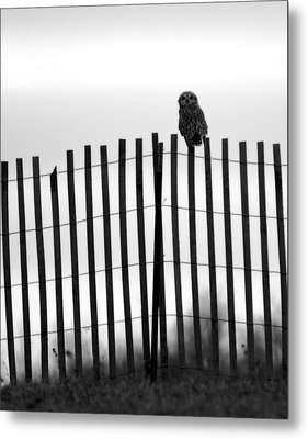 Waiting Owl Metal Print