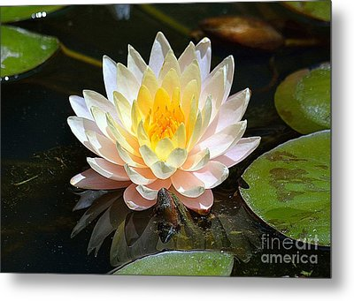 Metal Print featuring the photograph Water Lily by Lisa L Silva