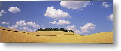 Wheat Crop In The Field, Washington Metal Print by Panoramic Images