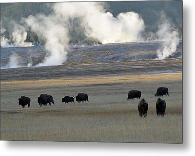 Where The Buffalo Roam Metal Print by Bruce Gourley