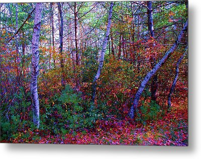 White Birch - Pocono Mountains Metal Print