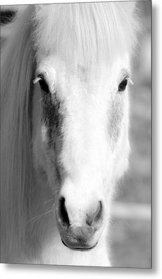 White Horse  Metal Print by Tommytechno Sweden
