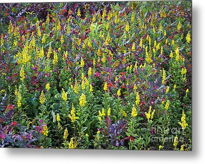 Wildflower Meadow Metal Print by John Greim