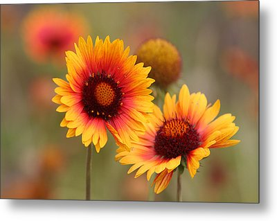 Wildflowers Metal Print by Darryl Wilkinson