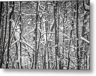 Winter Forest Abstract Metal Print