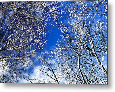 Winter Trees And Blue Sky Metal Print by Elena Elisseeva