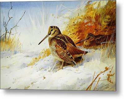 Winter Woodcock  Metal Print by Celestial Images