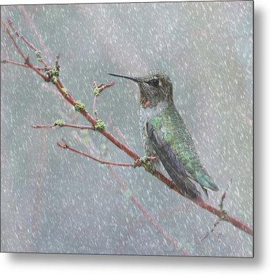 Wintering Hummingbird Metal Print