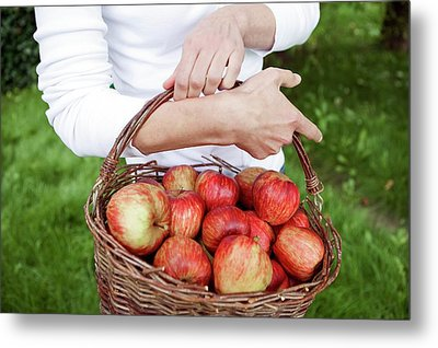 Woman Picking Apples Metal Print