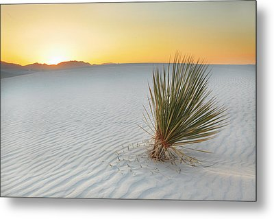 Yucca Plant At White Sands Metal Print