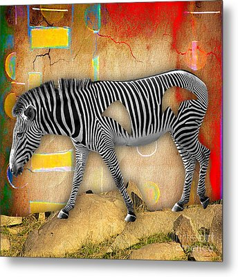 Zebra Collection Metal Print