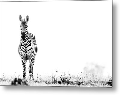 Metal Print featuring the photograph Zebra Facing Forward Washed Out Sky Bw by Mike Gaudaur