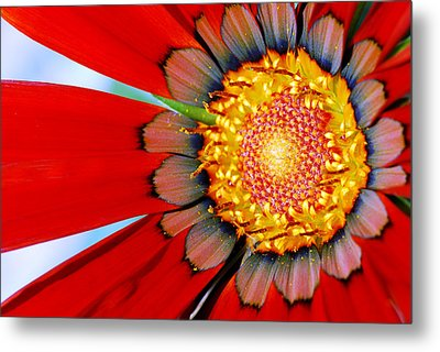 Zinnia In Red Metal Print by Wendy Wilton