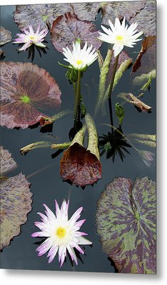 La, New Orleans, New Orleans Botanical Metal Print by Jamie and Judy Wild