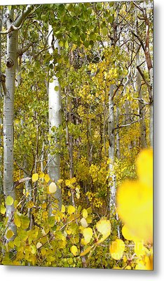 Sierra Autumn Metal Print by ELITE IMAGE photography By Chad McDermott