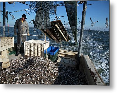 Shrimp Fishing Metal Print