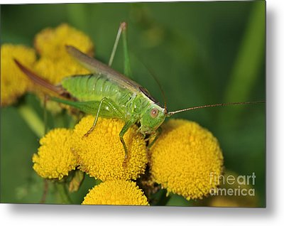 110221p244 Metal Print by Arterra Picture Library