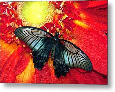 Butterfly Metal Print by Tam Ryan