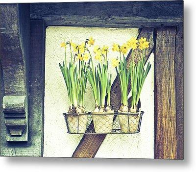 Daffodils Metal Print by Tom Gowanlock