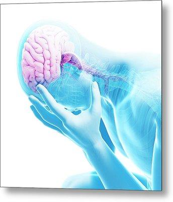 Human Brain Metal Print by Sebastian Kaulitzki