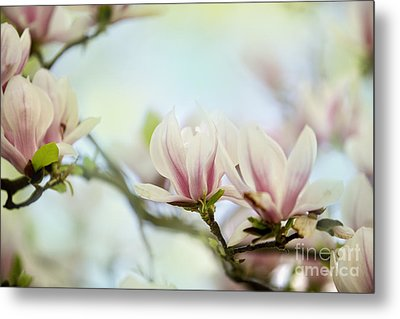 Magnolia Flowers Metal Print by Nailia Schwarz