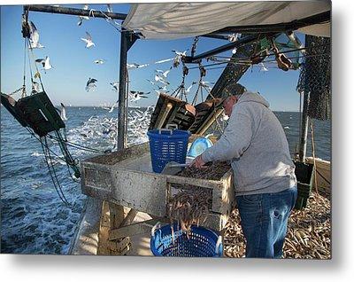Shrimp Fishing Metal Print by Jim West