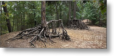 120223p257 Metal Print by Arterra Picture Library