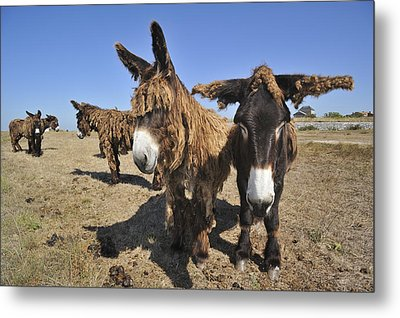 120920p029 Metal Print by Arterra Picture Library
