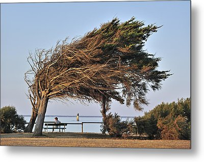 Metal Print featuring the photograph 120920p152 by Arterra Picture Library