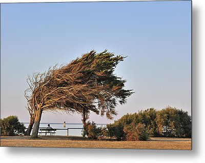 Metal Print featuring the photograph 120920p153 by Arterra Picture Library